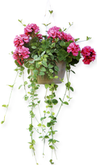Reflect Multimedia -- Creating the Digital Garden on the